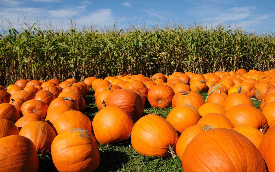 Orange (as in pumpkin) is the new black