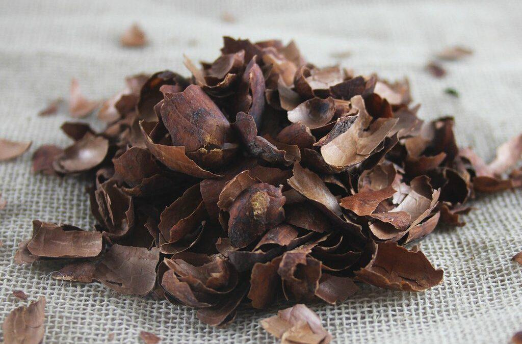 Cacao tea review